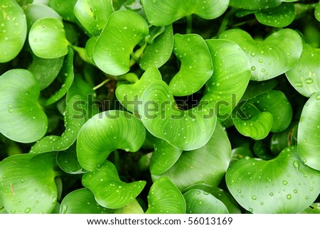 green plants background