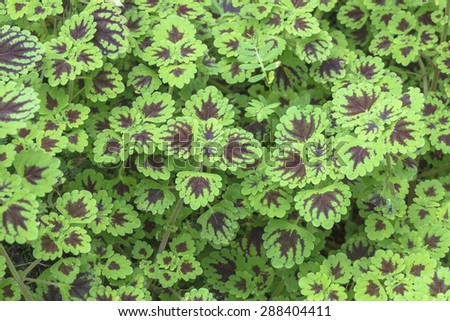 Green plants cover the ground of the natural forest. - stock photo