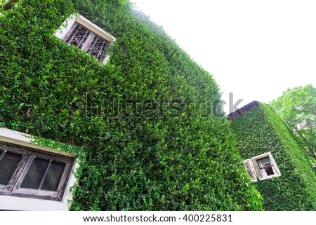 Green Plants Covered a building - stock photo