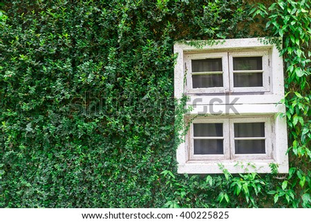 Green Plants Covered and A Window Frame - stock photo