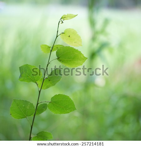 Green plants for your design photo for you - stock photo