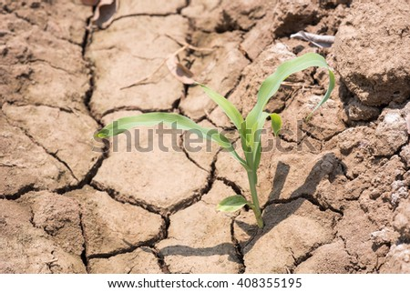 Green plants grow on the dry cracked earth