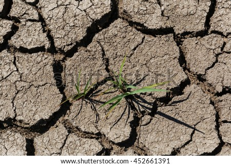 green plants growing on dry cracked soil