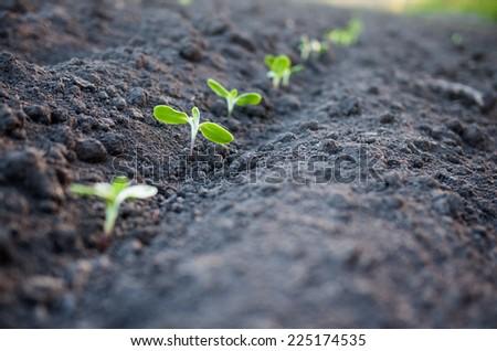 green plants growth - stock photo
