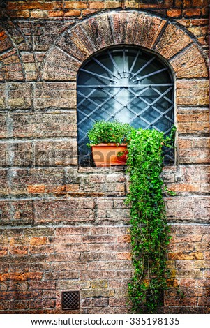 green plants in an old window in San Gimignano, Italy - stock photo