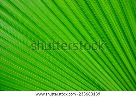 Green plants in Singapore Botanic Gardens  - stock photo
