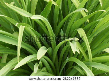 Green plants in the garden. Close up.                                 - stock photo