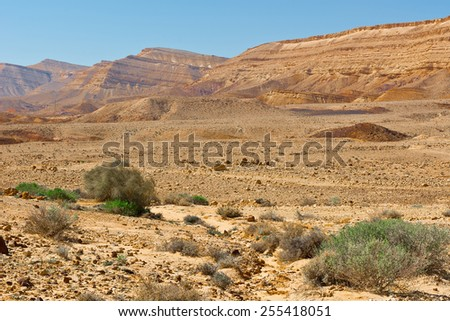 Green Plants of the Negev Desert in Israel - stock photo