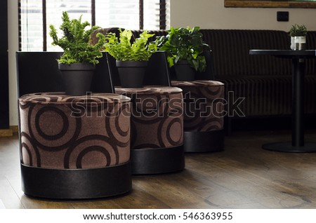 Green plants on brown chairs