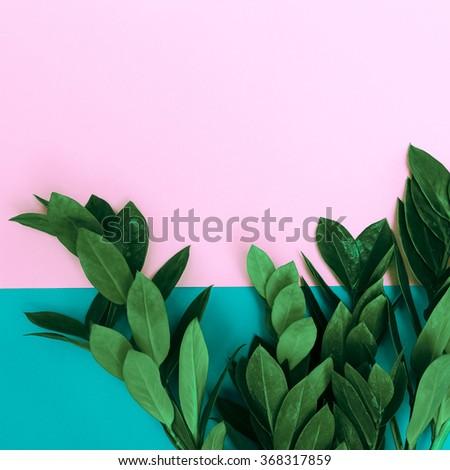 Green Plants on stylish background. Minimalist fashion - stock photo