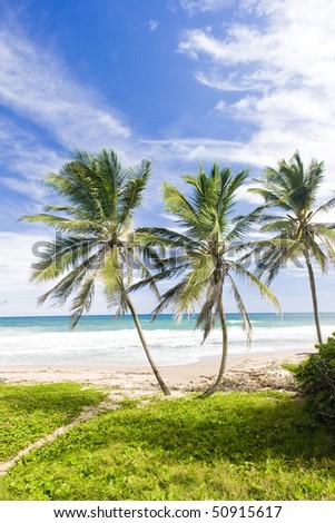 Green Point, Eastern coast of Barbados, Caribbean - stock photo