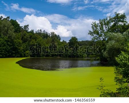 Green pond full of alga (Czech Republic) - stock photo