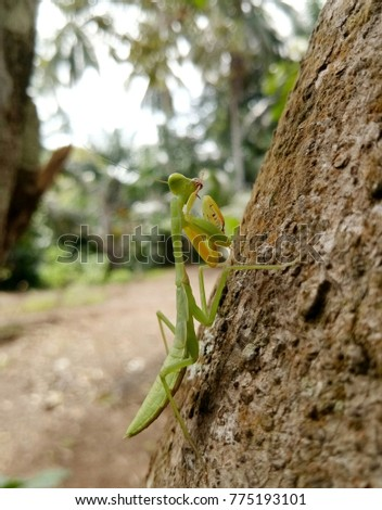 green preying mantis rest at the tree on blurred background