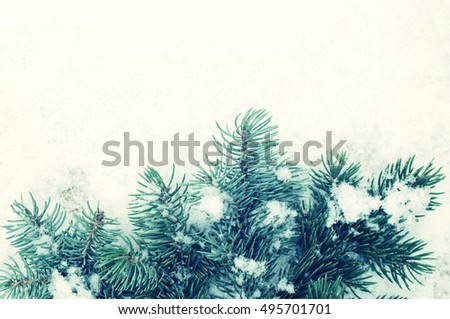Green prickly branches were eaten on snow. New Year's winter background with fir-tree branches on snow
