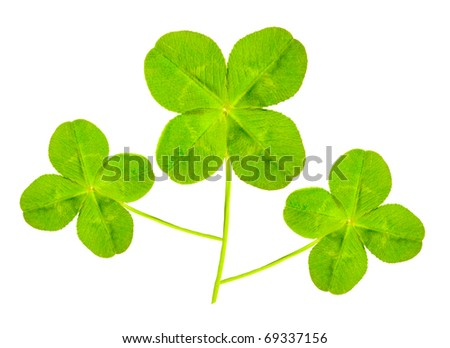Green quarter-foils, symbols of a St Patrick day on a white background - stock photo