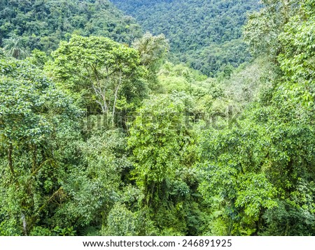 green rain forest jungle area in the national park in Brazil - stock photo