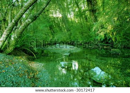 Green rainforest background in New Zealand wilderness - stock photo
