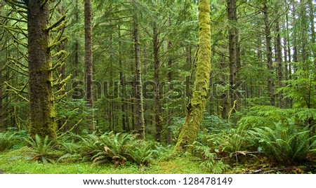 Green Rainforest Thick with Moss and Lush Plants At Ecola State Park Oregon USA - stock photo