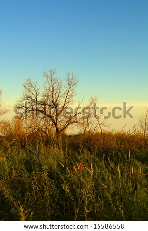 Green reed on the sunset - stock photo