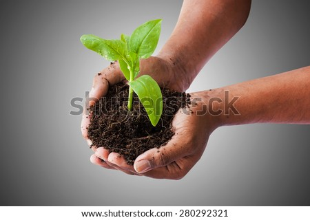 Green returns to nature, environment concept,hand holding green tree on gray background - stock photo