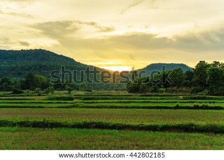 green rice field and mountain with sunset on twilight time in Thailand