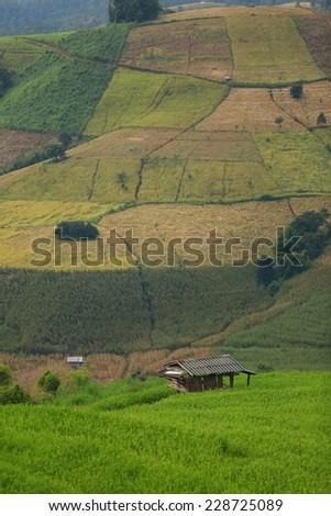 Green rice field on the mountain - stock photo