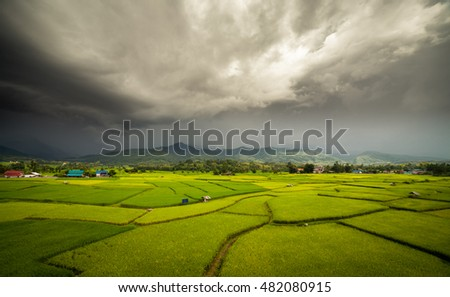 Green rice field with heavy storm background.