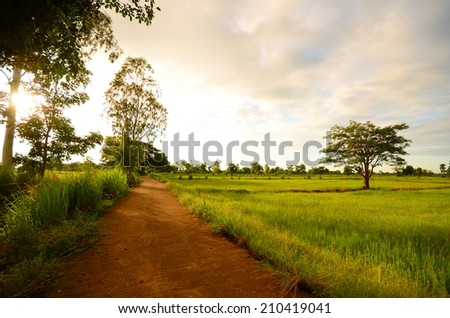 Green Rice Fields and Country Road at Morning Sunrise