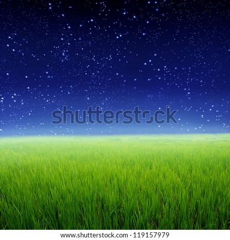 Green rice fields and Star night - stock photo