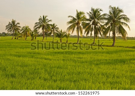 Green rice fields in Northern Highlands of Thailand South East Asia - stock photo