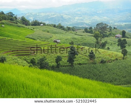 Green rice fields step in Northern of Thailand