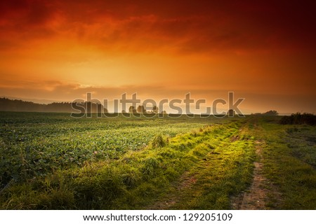 green road under the red sky - stock photo