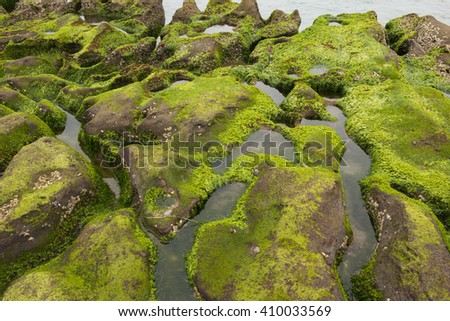 Green rocks beach at Taiwan, Indonesia. Sunrise at Taiwan Beach with green seaweeds rocks by the beach.