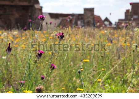 green roof, meadow with wildflowers on a roof in the old town creating a habitat for wildlife, selected focus, narrow depth of field - stock photo