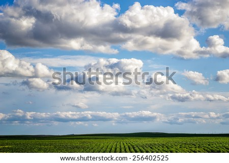 green rows of soybeans with a low horizon against a blue cloudy sky. rows going straight into the horizon - stock photo