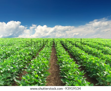 Green rows on background blue sky. Composition of the nature - stock photo