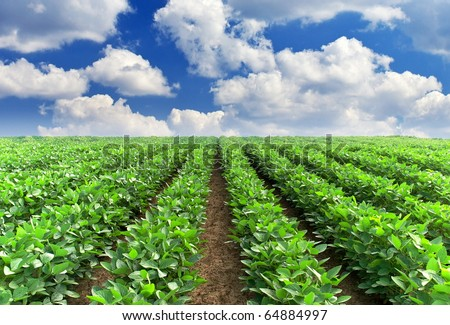 Green rows on field and greater white cloud - stock photo