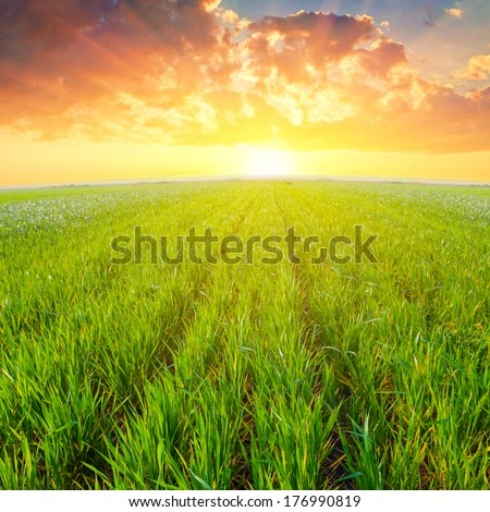green rural field at the sunset - stock photo