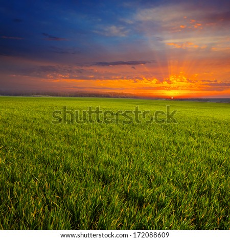 green rural scene at the sunset - stock photo