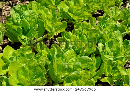 Green salad closeup - stock photo