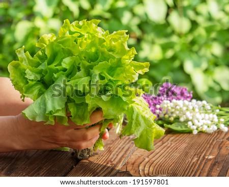 Green salad, harvest  - stock photo