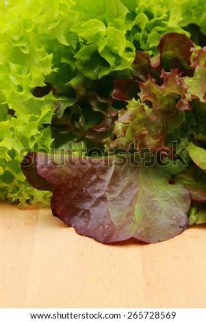 Green salad texture - stock photo