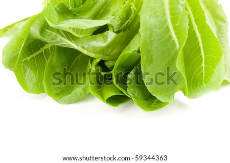Green salads leaves on a white background