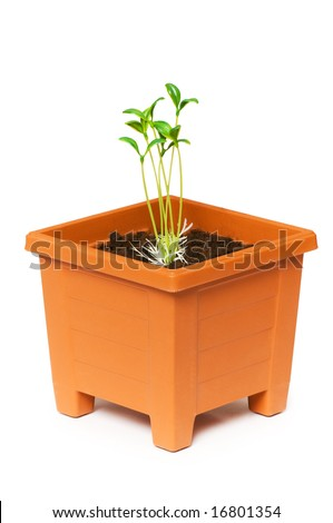 Green saplings growing in the clay pot - stock photo