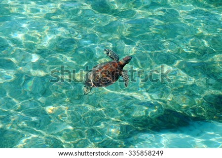 Green sea turtle at the Great Barrier Reef, Australia - stock photo
