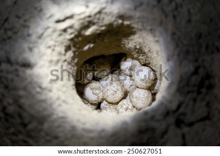 Green sea turtle eggs in sand hole on a beach at hatchery site - stock photo