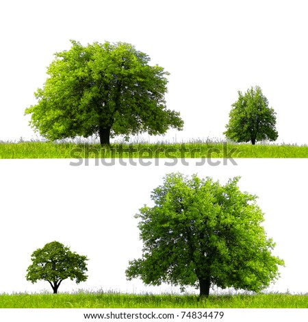 Green season - stock photo