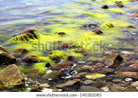 green seaweed in sea water - stock photo