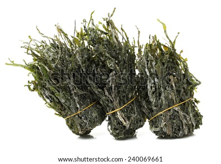 green seaweed on white background  - stock photo