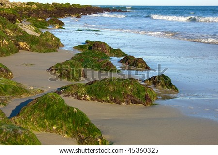 Green seaweeds covering stones on the beach - stock photo
